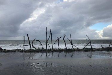 Hokitika Driftwood & Sand