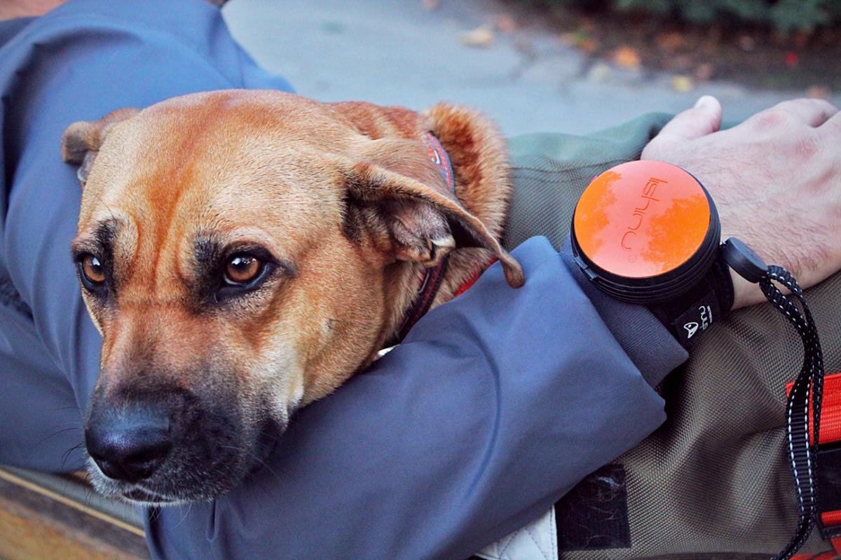 Lishinu handsfree vodítko pro psa
