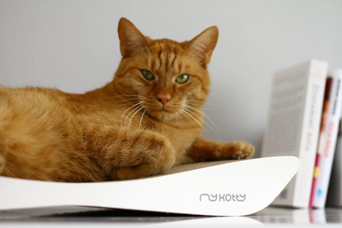 Moderní kartonové škrabadlo pro kočky