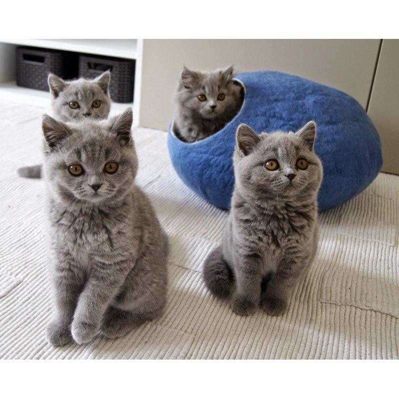 Ručně plstěný Coccon pelíšek z ovčí vlny pro kočku
