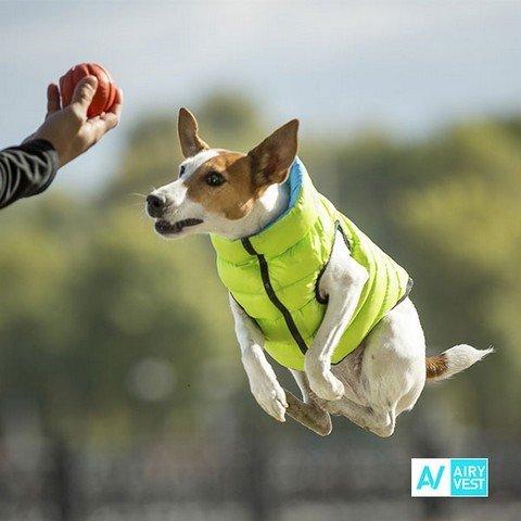 Zelená vesta pro psy