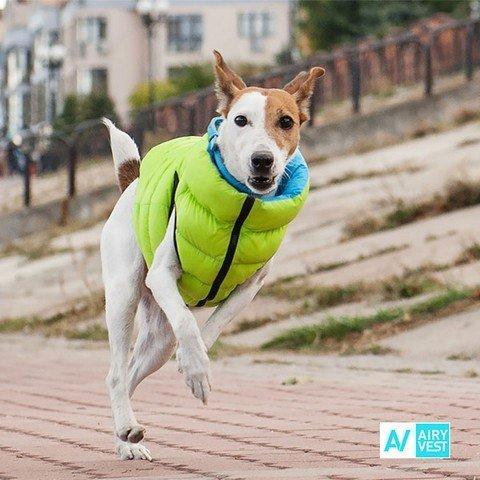 Zelená vesta pro psa