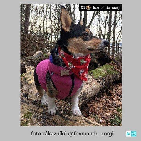 Růžový obleček pro psa
