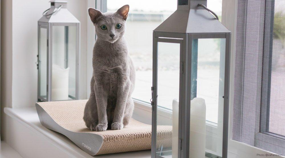 Moderní kočičí škrabadlo z kartonu