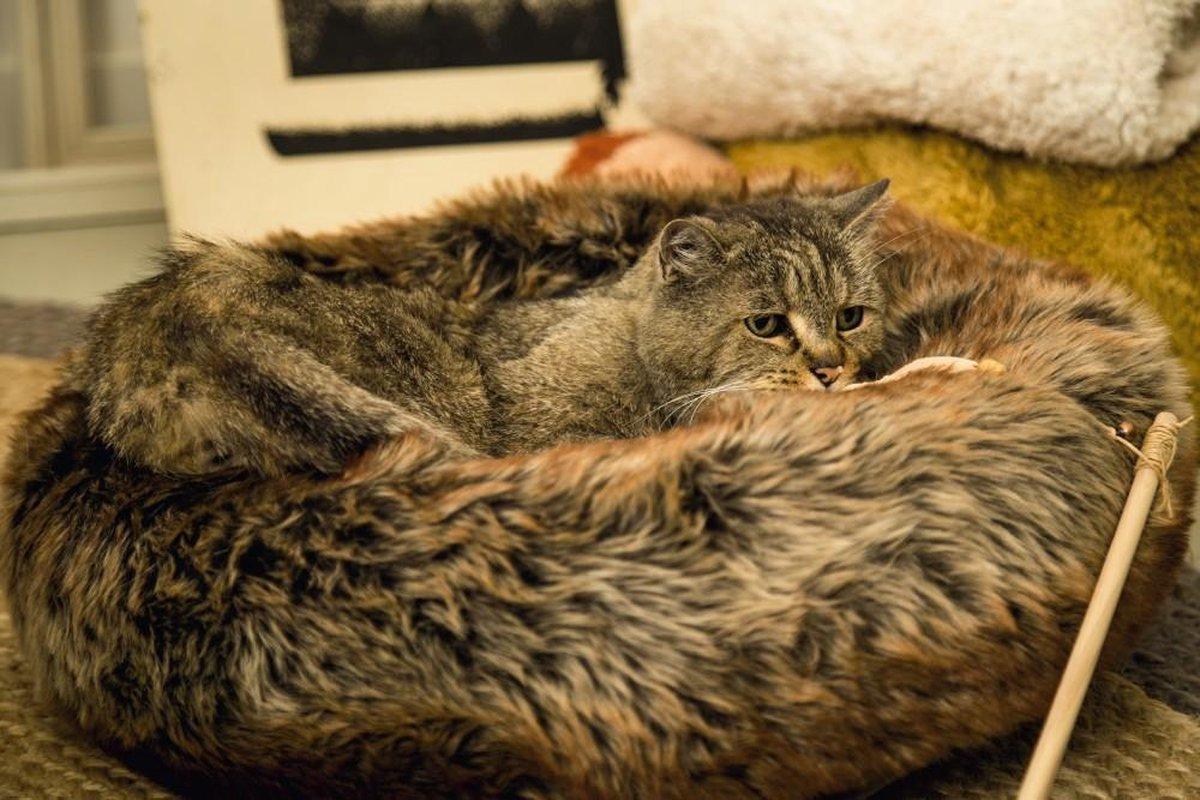 Pelech pro kočičky a pejsky