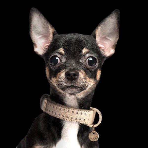 Kožený obojek pro psa