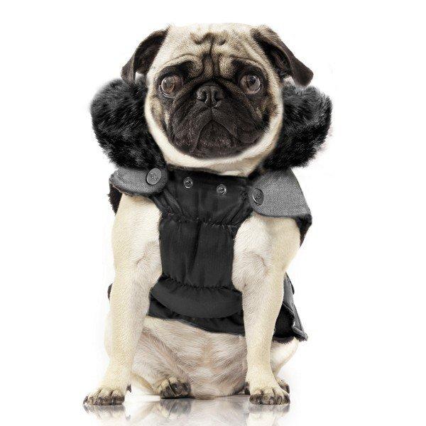 Obleček pro psa - kabát
