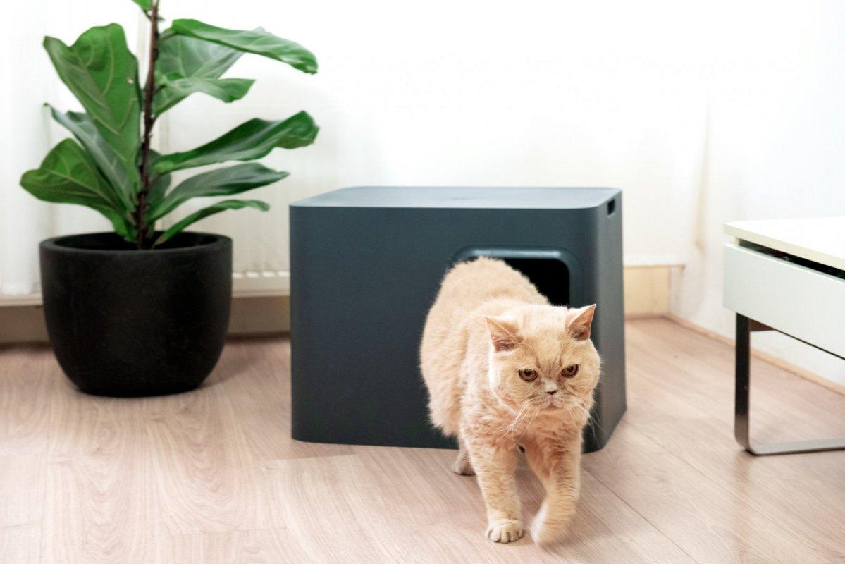 Designové kočičí WC