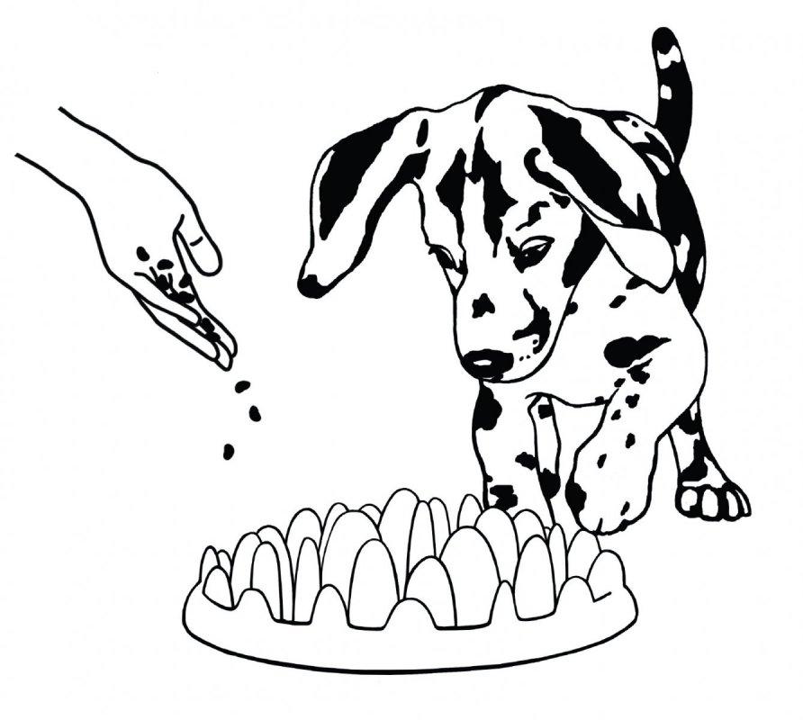 Zpomalovací interaktivní miska pro malé psy a štěňata