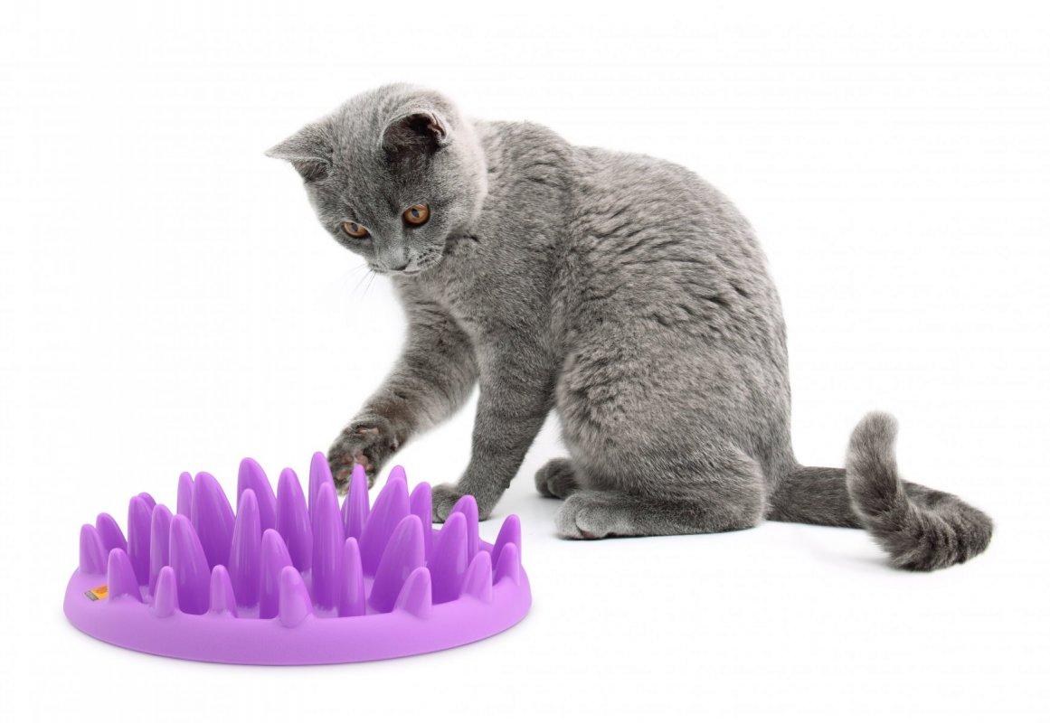 Zpomalovací a interaktivní miska pro kočky Northmate Catch