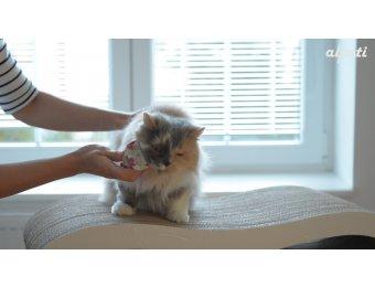 FURminator pro psy a kočky: video recenze