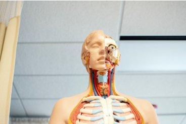 Co je to ENDOKANABINOIDNÍ systém v lidském těle?