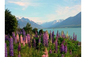 Ohau lake National Park