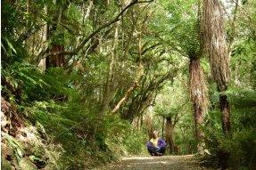 Cesta lesem k Matai falls