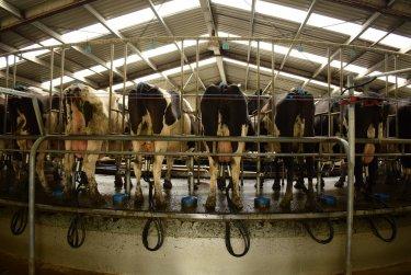 Mléčná farma