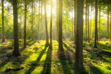 Sázení stromů