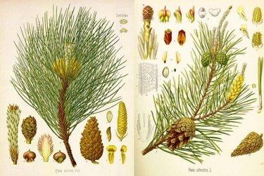 Lesy kolem nás - Lesní herbář