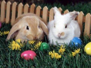 Veselé Velikonoce na dvorečku