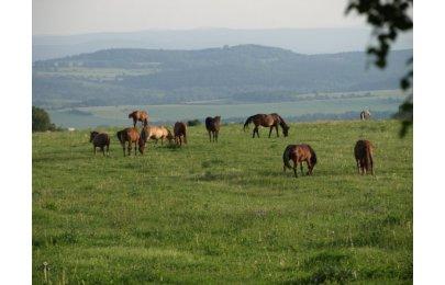 Naučná stezka o koních
