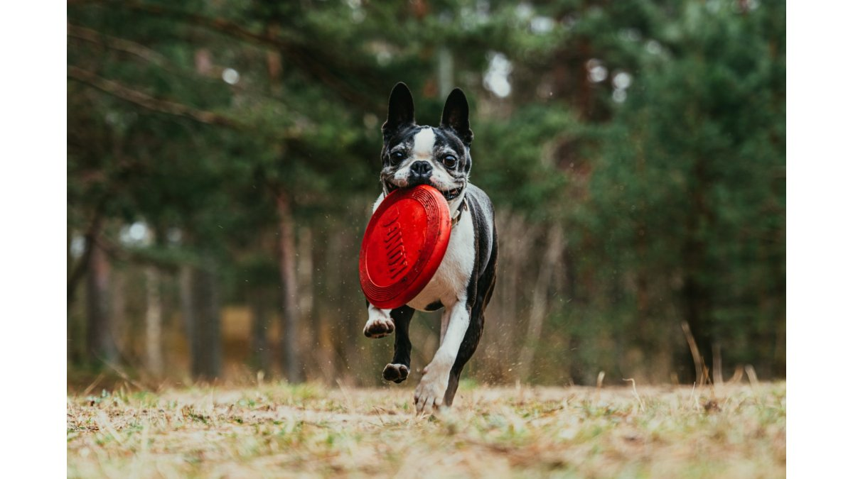 Poznáte Dogfrisbee?
