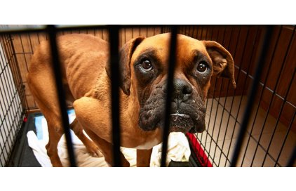 Týrání psa vyřešeno pomocí špionážní techniky
