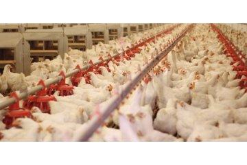 Spionagekamera im Kampf gegen die schreckliche Behandlung von Tieren