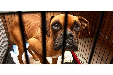 Hundemissbrauch mit Spionagetechnik entdeckt