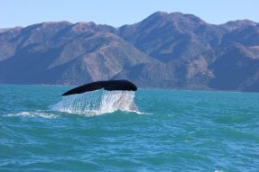 Pozorování velryb