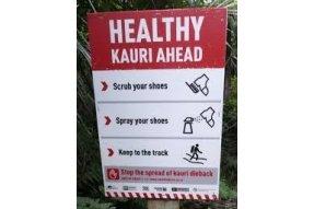 Informace k pohybu v oblasti stromů Kauri