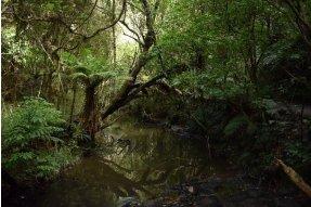 Lesní cesta k jezeru Wilkie