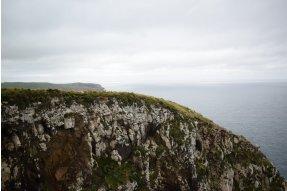 Ovce na okraji útesu