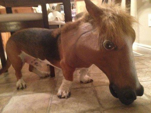 Maska koně