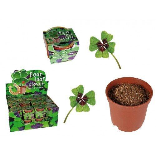 Vypěstuj si čtyřlístek - květináček